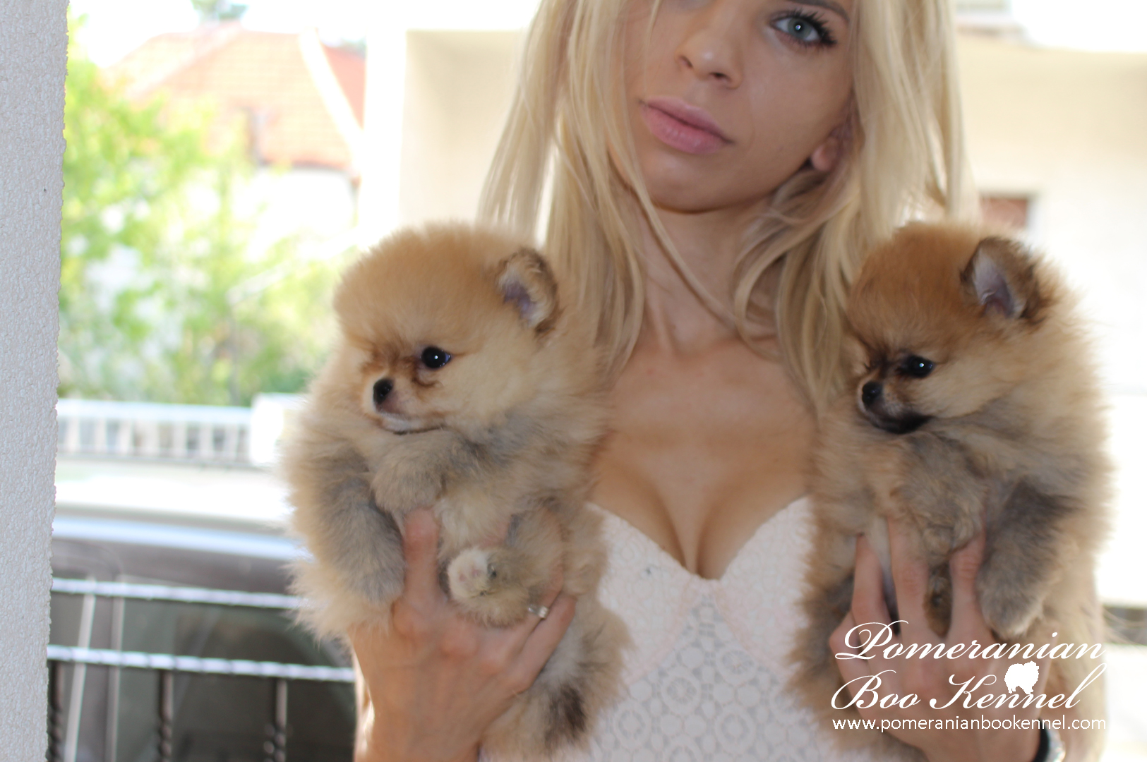 Pomeranian Boo Female Puppy Premium quality